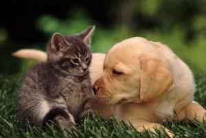 Зоозащитники Крыма требуют принять новые правила содержания домашних животных