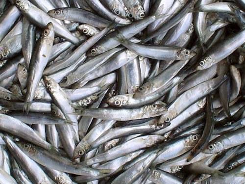 ВКерчи 4декабря проведут «Фестиваль рыбы»