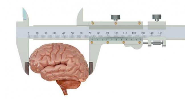 По форме мозга можно определить степень выраженности у человека разных личностных черт, например, открытости или альтруизма. По форме мозга можно также определить риск развития у человека психических расстройств. Об этом сообщают специалисты из Кембриджского университета.
