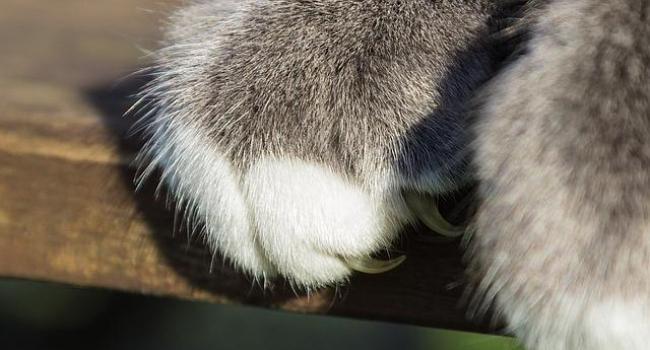 Кошачьи царапины опаснее, чем Вам кажется