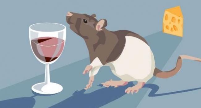 Учёные объяснили, почему алкоголизм не приводит к ожирению, несмотря на высокую калорийность спирта.