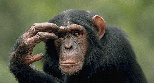 Почему люди живут дольше мух и обезьян?