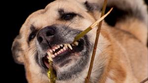 В Бахчисарайском районе Крыма нашли бешеную собаку и «закрыли» её на карантин