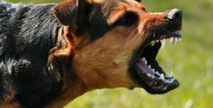 В Крыму поймали бездомную собаку, которая покусала ребенка и домашних животных