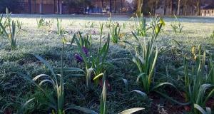 В степных и предгорных районах Крыма ожидаются заморозки