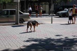Время грустных собак Феодосии